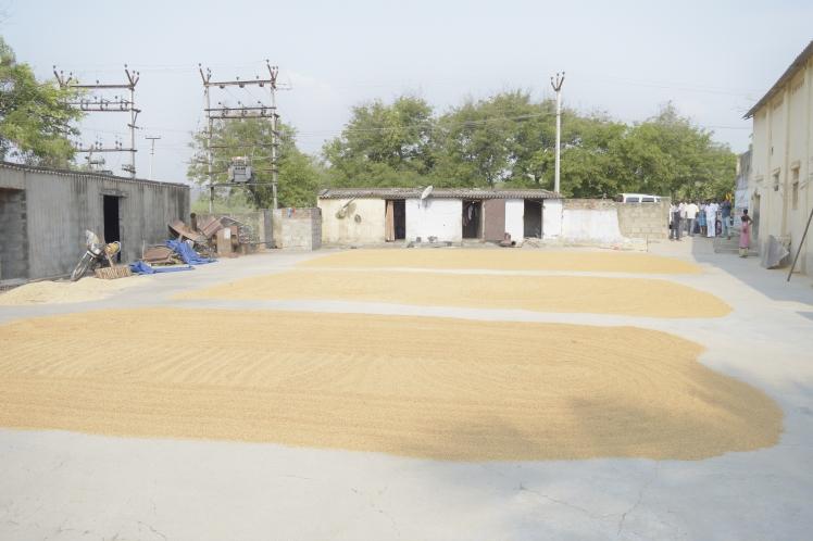 Rice Mill 2